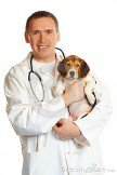 veterinarian-doctor-beagle-puppy-7932058.jpg