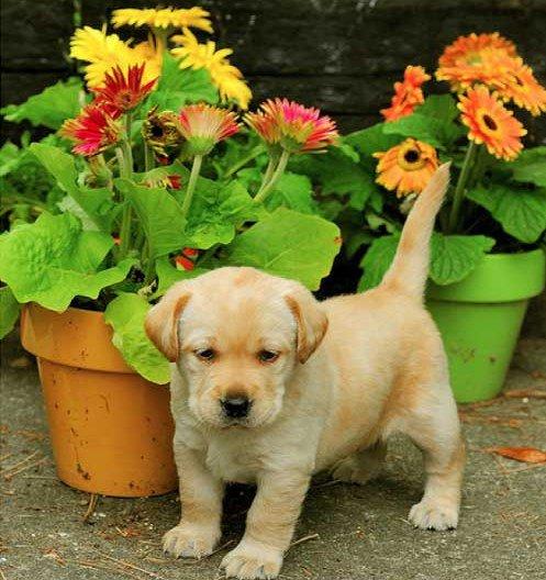 Купить собаку или щенка Продажа собак в Липецке на