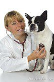 female-vet-doctor-20067317.jpg