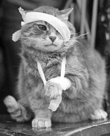 Какие бывают травмы у кошек