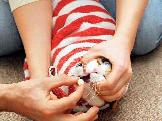 Как дать коту таблетку - правильно, если он выплевывает, из шприца, как заставить съесть